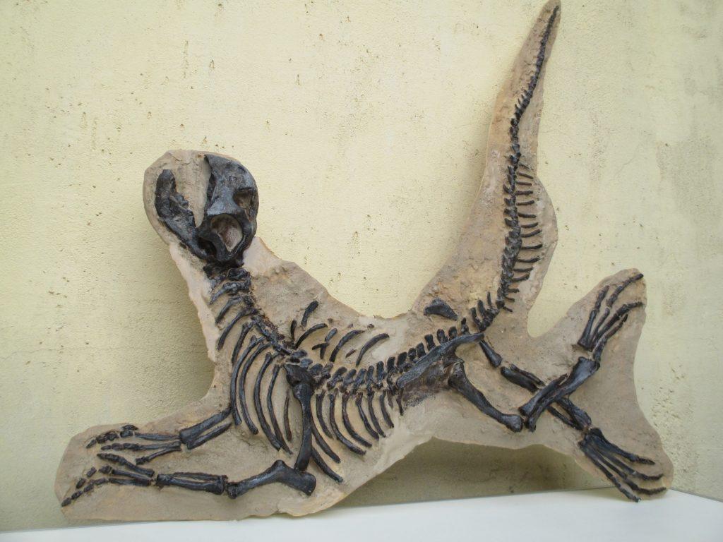 museum-fi-prosauropode