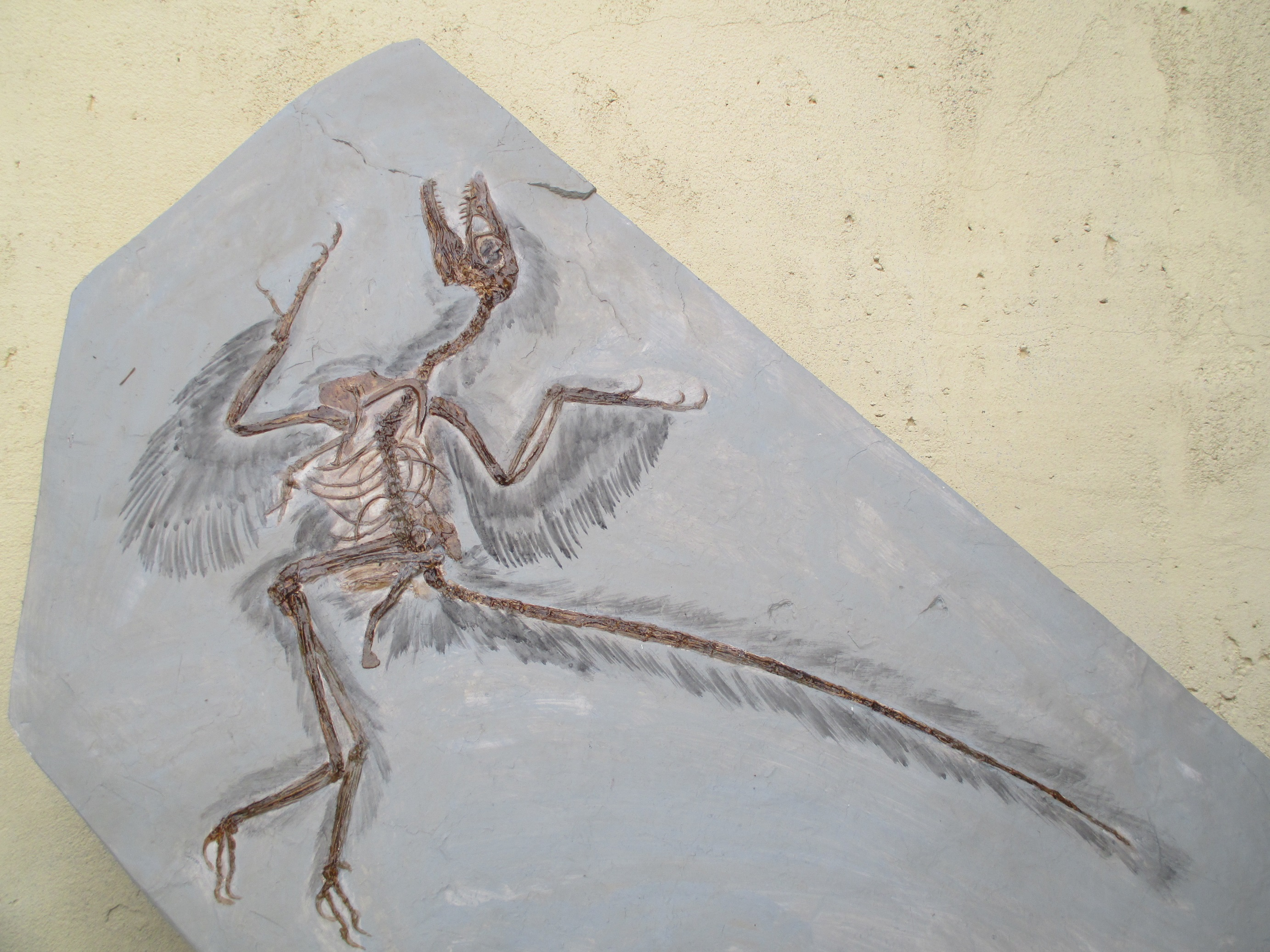 museum-fi-velociraptor