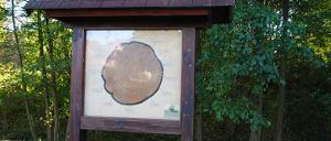 Bild 3: Schautafel mit Baumscheibe